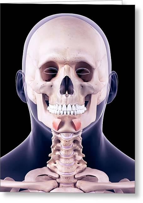 Facial Muscles Greeting Card by Sebastian Kaulitzki/science Photo Library