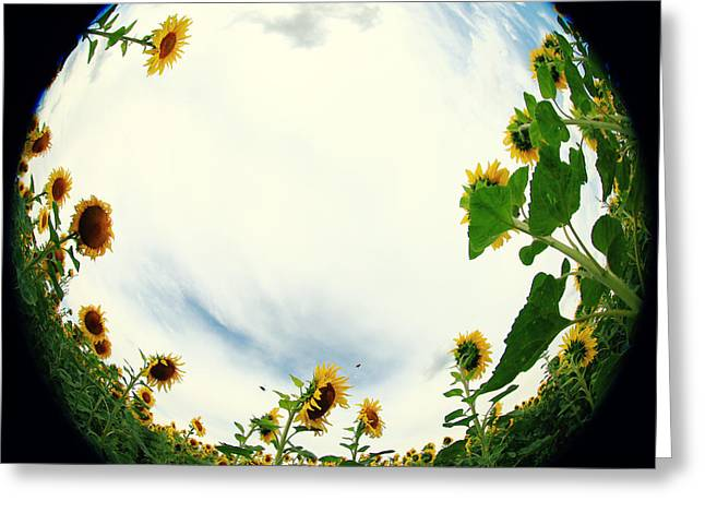 Sunflowers Greeting Card by Falko Follert