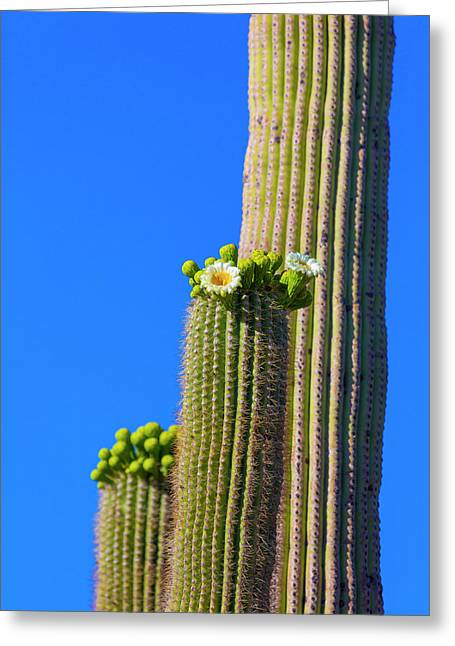 Usa, Arizona, Tucson Greeting Card by Jaynes Gallery