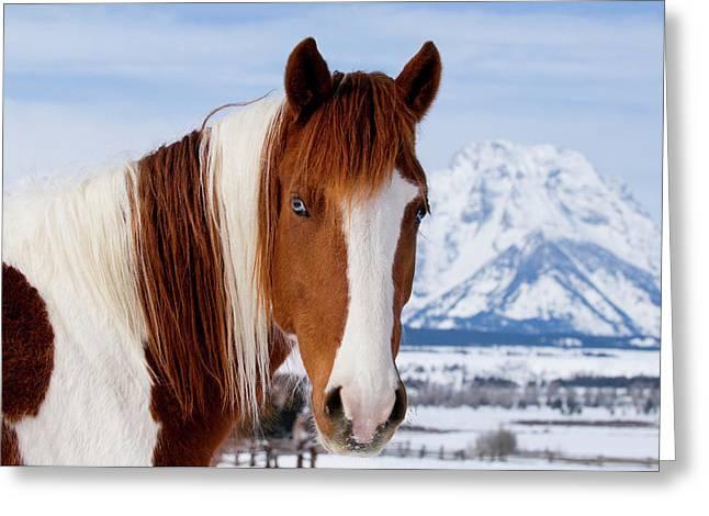 Usa, Wyoming, Grand Teton National Park Greeting Card
