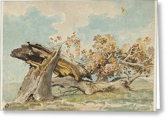 A Fallen Tree Null Carlo Labruzzi Greeting Card by MotionAge Designs
