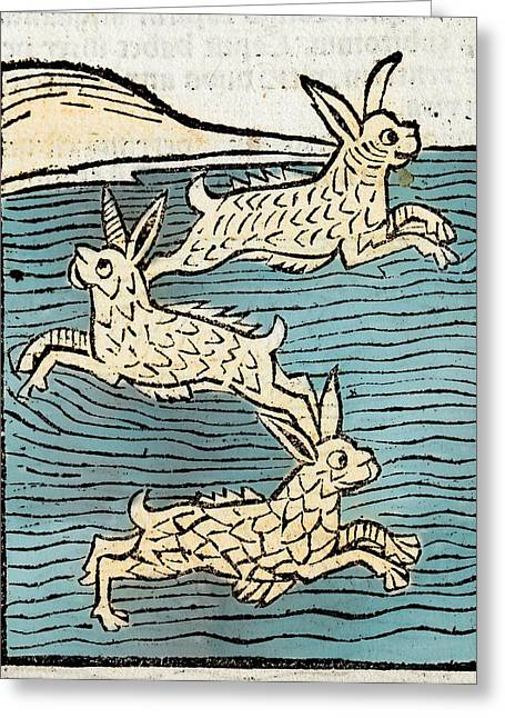1491 Sea Hares From Hortus Sanitatis Greeting Card by Paul D Stewart