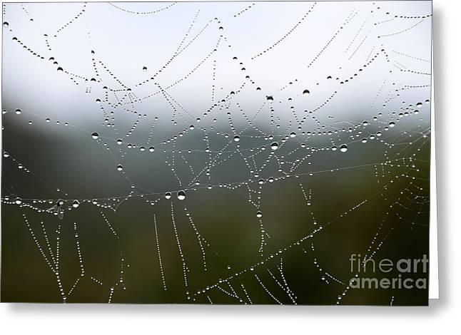 Dew On Spiderweb  Greeting Card by Thomas R Fletcher