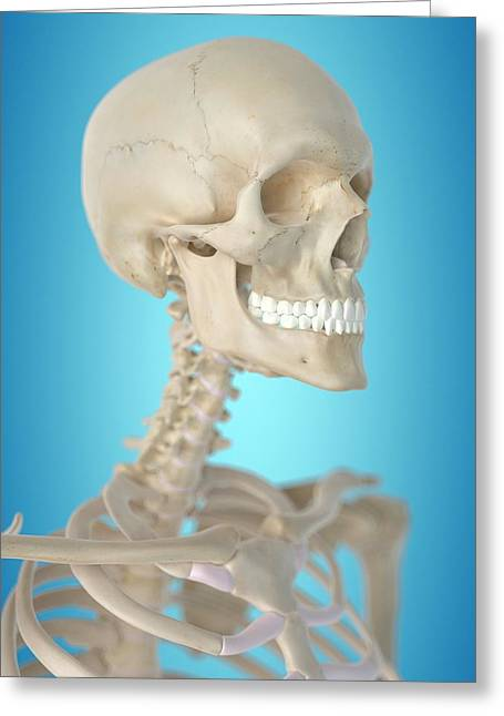 Human Skull Greeting Card by Sciepro