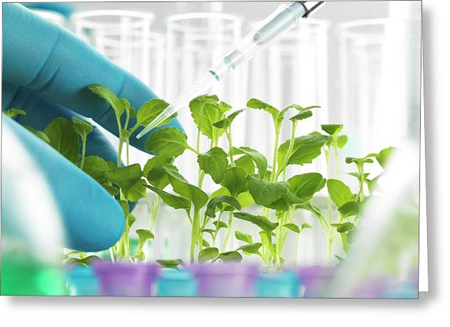 Plant Biotechnology Greeting Card