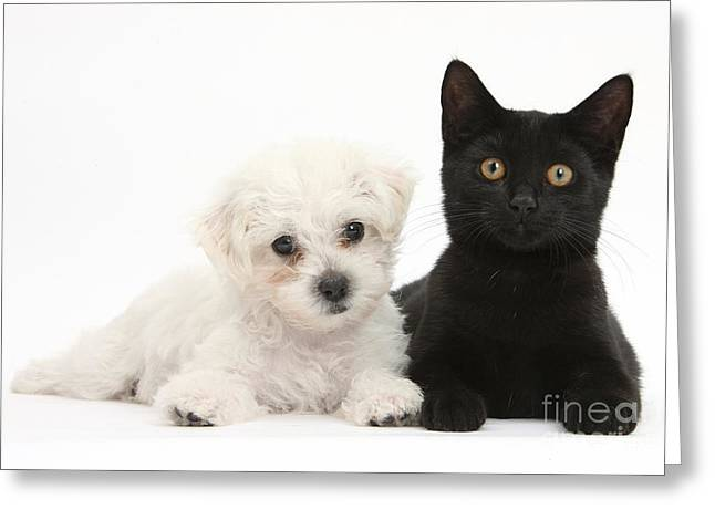 Puppy And Kitten Greeting Card by Mark Taylor
