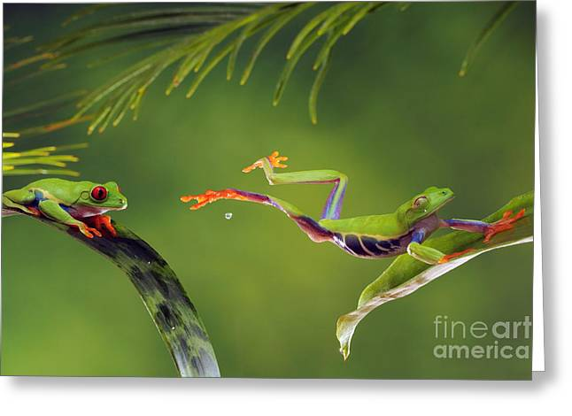 Red-eyed Tree Frog Greeting Card by Scott Linstead