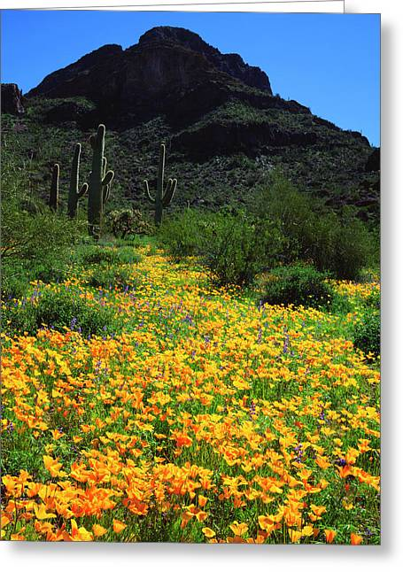 Usa, Arizona, Organ Pipe Cactus Greeting Card