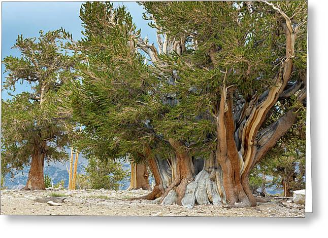 Usa, California, Inyo National Forest Greeting Card
