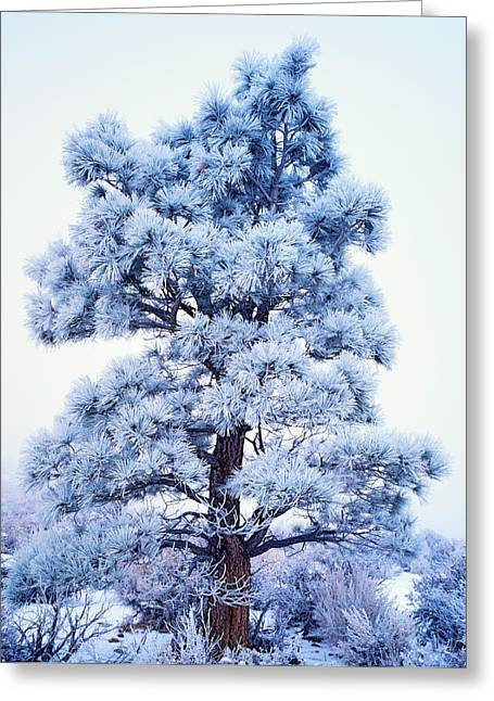 Usa, California, Sierra Nevada Mountains Greeting Card