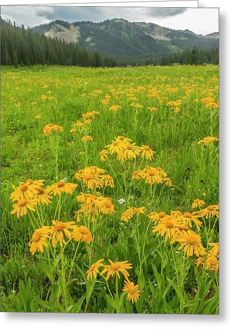 Usa, Colorado, Gunnison National Forest Greeting Card