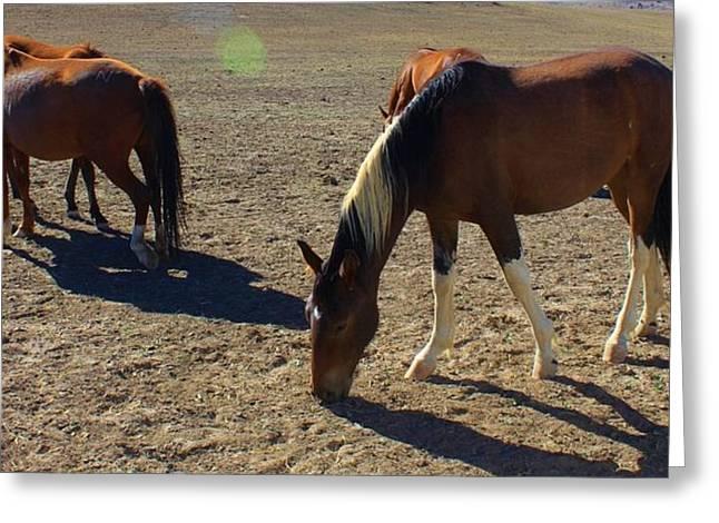 152 Greeting Card by Wynema Ranch