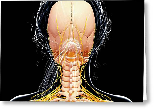 Female Nervous System Greeting Card by Pixologicstudio/science Photo Library