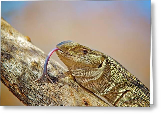 African Reptiles Greeting Card