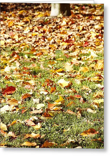 Autumn Greeting Card by Les Cunliffe