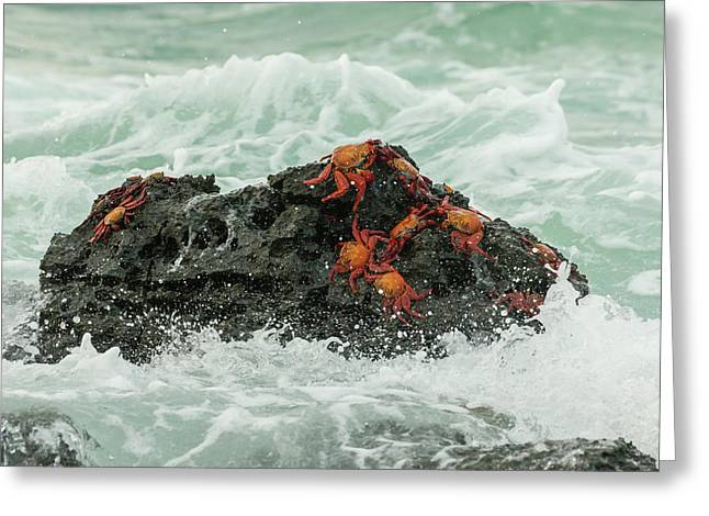 Ecuador, Galapagos National Park Greeting Card