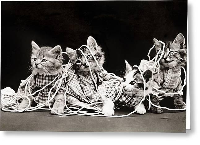 Frees Kittens, C1914 Greeting Card