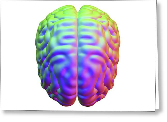 Human Brain Greeting Card