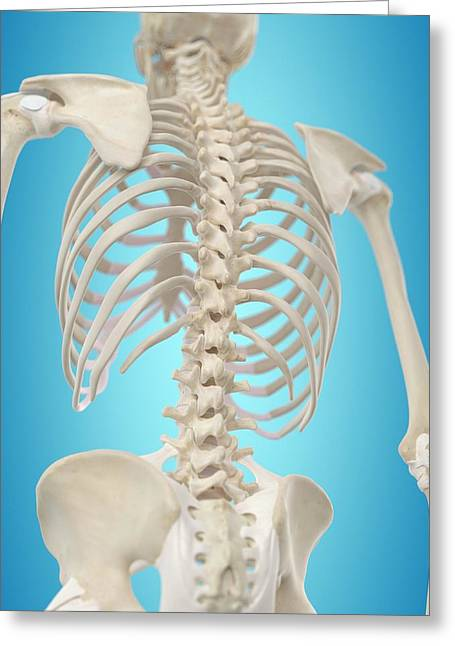 Human Spine Greeting Card by Sciepro