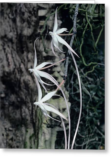 Orchid Flowers Greeting Card