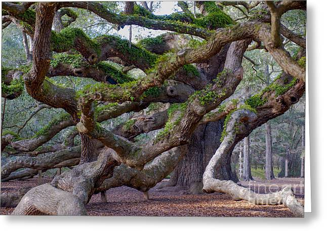 Angel Oak Tree Unique View Greeting Card