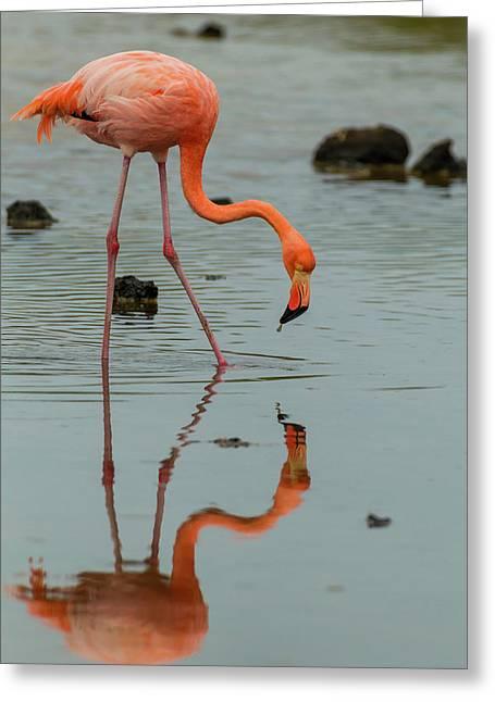 Ecuador, Galapagos National Park Greeting Card