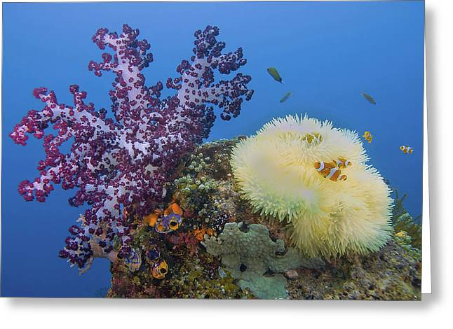 Indonesia, Papua, Raja Ampat Greeting Card by Jaynes Gallery