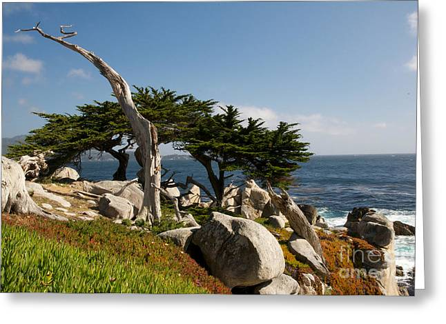 Greeting Card featuring the photograph 17 Mile Drive  by Vinnie Oakes