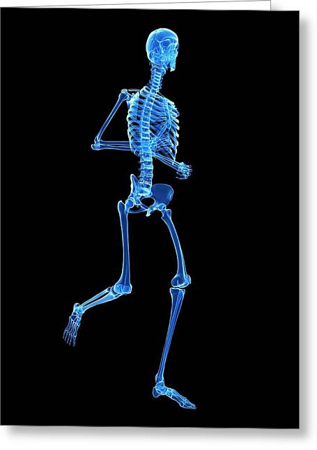 Skeletal System Of Runner Greeting Card