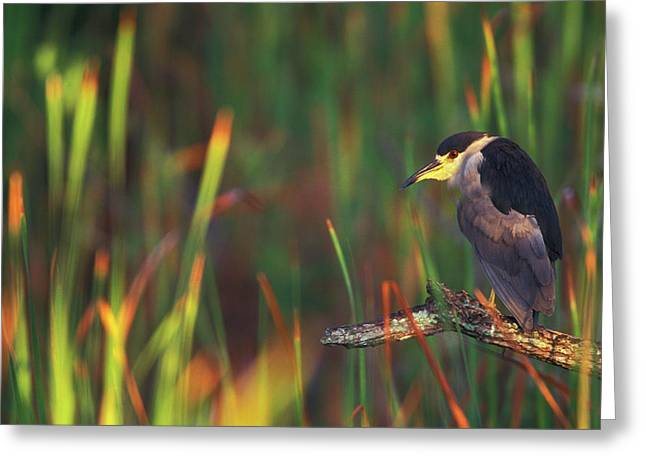 Usa, Florida, Everglades National Park Greeting Card by Jaynes Gallery