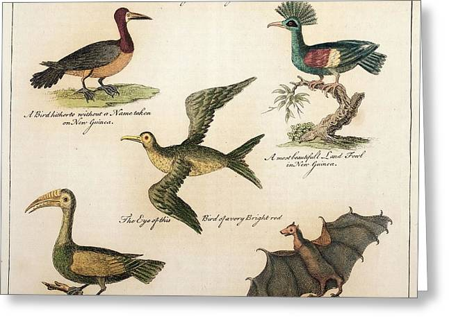 1735 William Dampier Birds Of The Pacific Greeting Card by Paul D Stewart