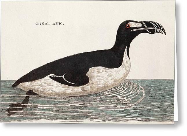 1776 Pennant Swimming Extinct Great Auk Greeting Card