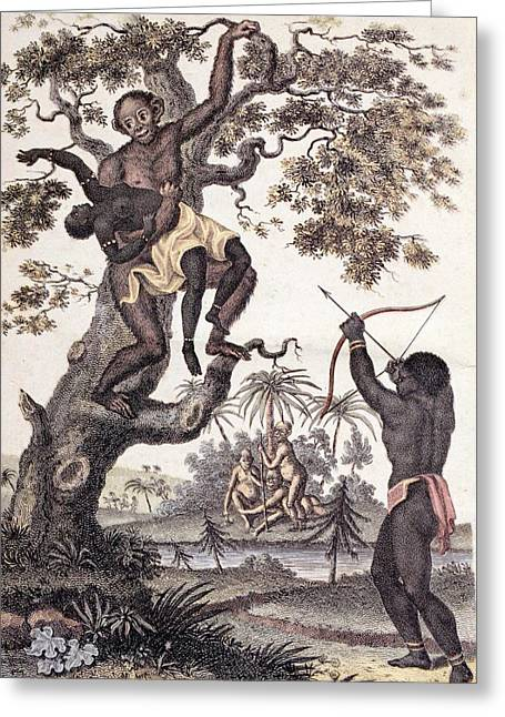1795 Ape Abducts Woman Sibly Chimp Orang Greeting Card by Paul D Stewart