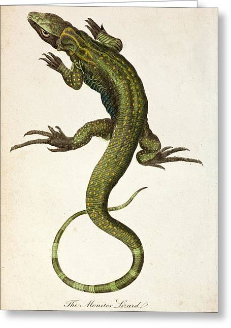 1795 Linnaeus Monitor Lacerta Monitor Greeting Card by Paul D Stewart