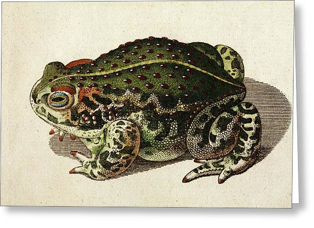 1796 Green Toad Bechstein Conservationist Greeting Card by Paul D Stewart