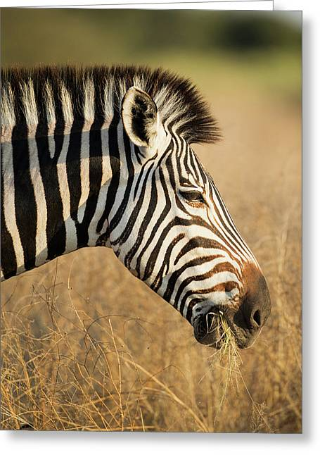 Africa, Botswana, Moremi Game Reserve Greeting Card