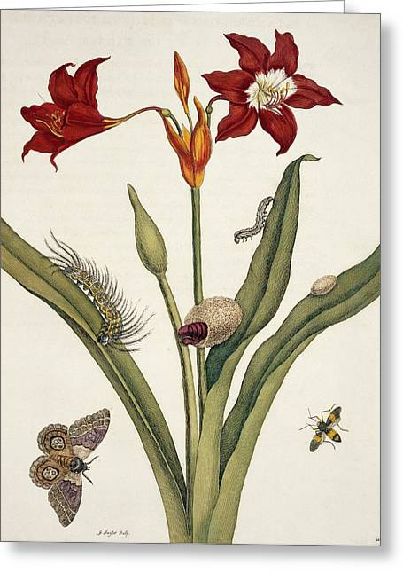 Insects Of Surinam Greeting Card by Natural History Museum, London/science Photo Library