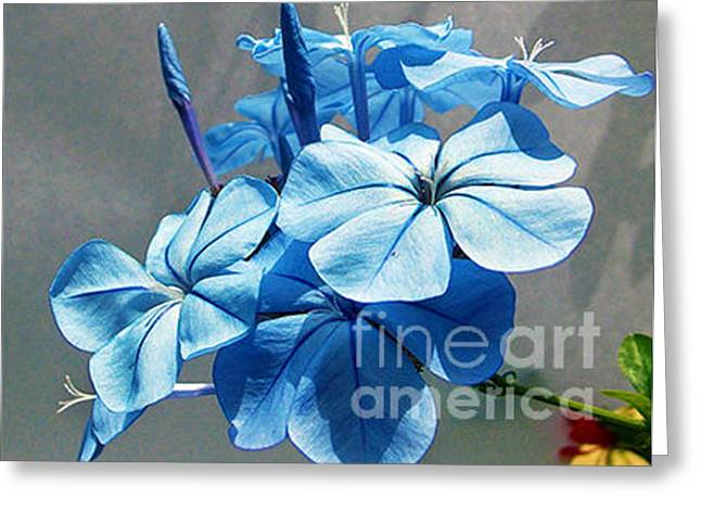 Greeting Card featuring the photograph 1810-blue Plumbago by Elvira Ladocki