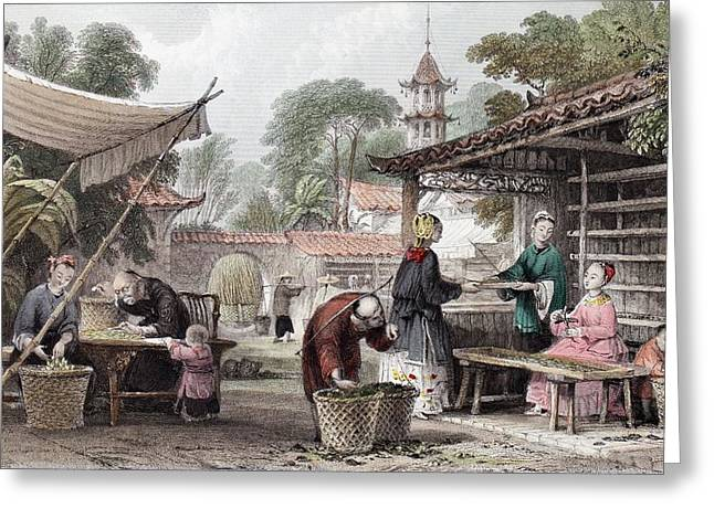 1843 Chinese Silk Silkworm Manufacture Greeting Card by Paul D Stewart