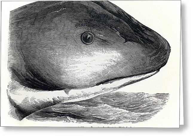 1848 Sea Serpent Monster Hms Daedalus Greeting Card