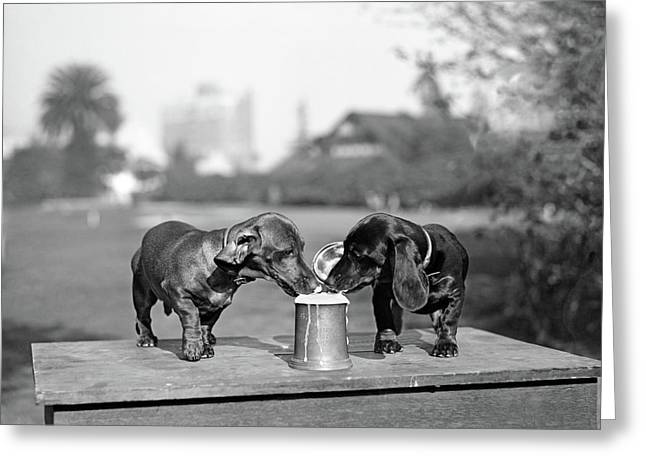 1890s Two Dachshund Puppies Lapping Greeting Card