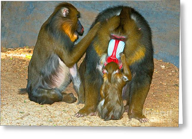 Mandrill Greeting Card by Millard H. Sharp