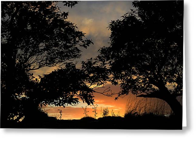 Sunset Greeting Card by Barbara Walsh