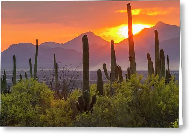 Usa, Arizona, Saguaro National Park Greeting Card