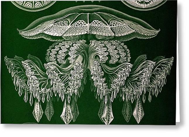 1904 Haeckel's Mistress Frida's Jellyfish Greeting Card
