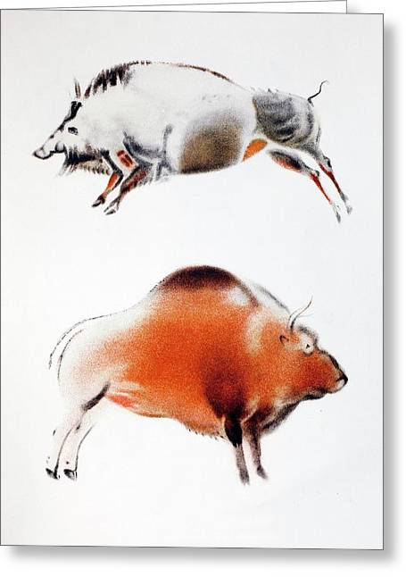 1916 Breuil Bison Boar Cave Painting Greeting Card by Paul D Stewart