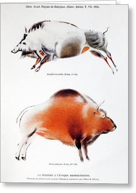 1916 Breuil Bison Boar Cave Painting Text Greeting Card
