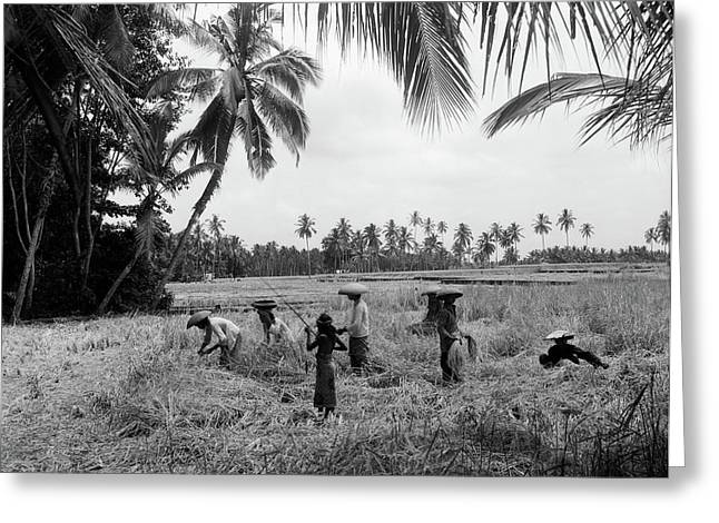 1920s 1930s 7 Balinese Workers In Rice Greeting Card