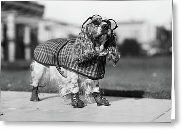 1930s Cocker Spaniel Wearing Glasses Greeting Card