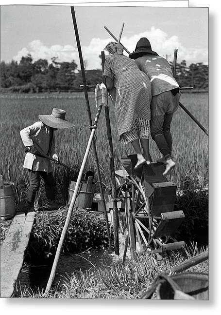 1930s Irrigating Rice Field Near Osaka Greeting Card